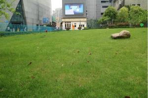 NHA-STEM国际课程中心校园绿地