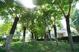北京理工大学环境