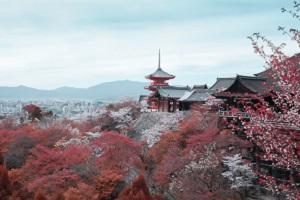 北二外日本留学还可以报考吗?